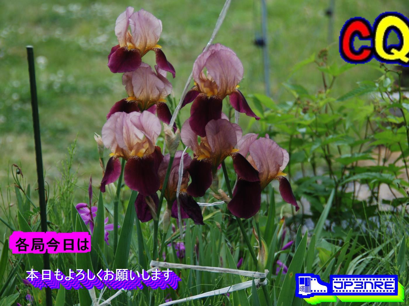 JF1RYU/